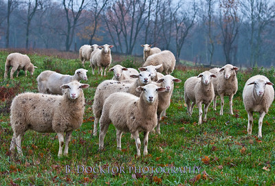 Herondale Farm-12
