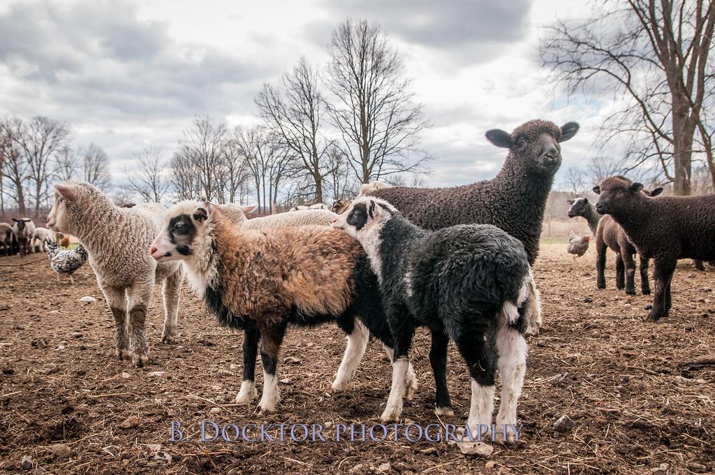 1304_Dashing Star Farm_152