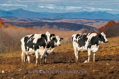 Pulver Farm Winchell Mountain-71