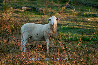1010_Ancramdale Farm Scenes_021