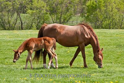 1004_Cedar Ridge horses_061