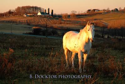 Brokaw's horse 3
