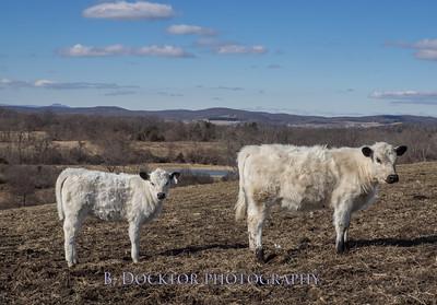 1602_Fox Hill Farm_017