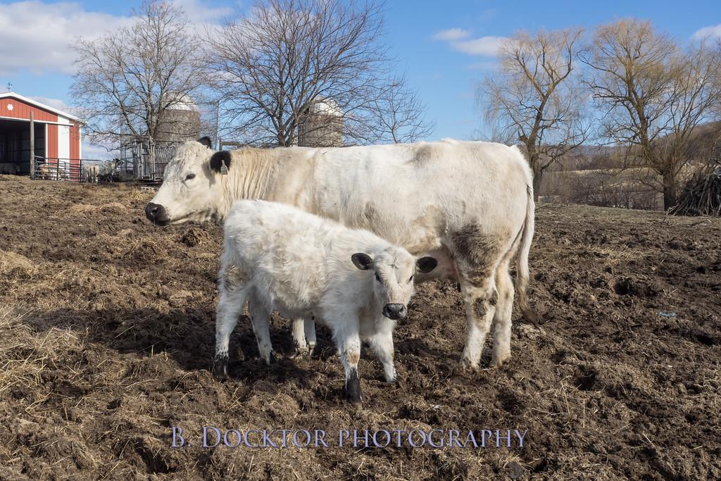 1602_Fox Hill Farm_007