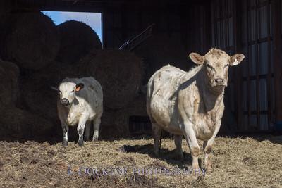 1602_Fox Hill Farm_018