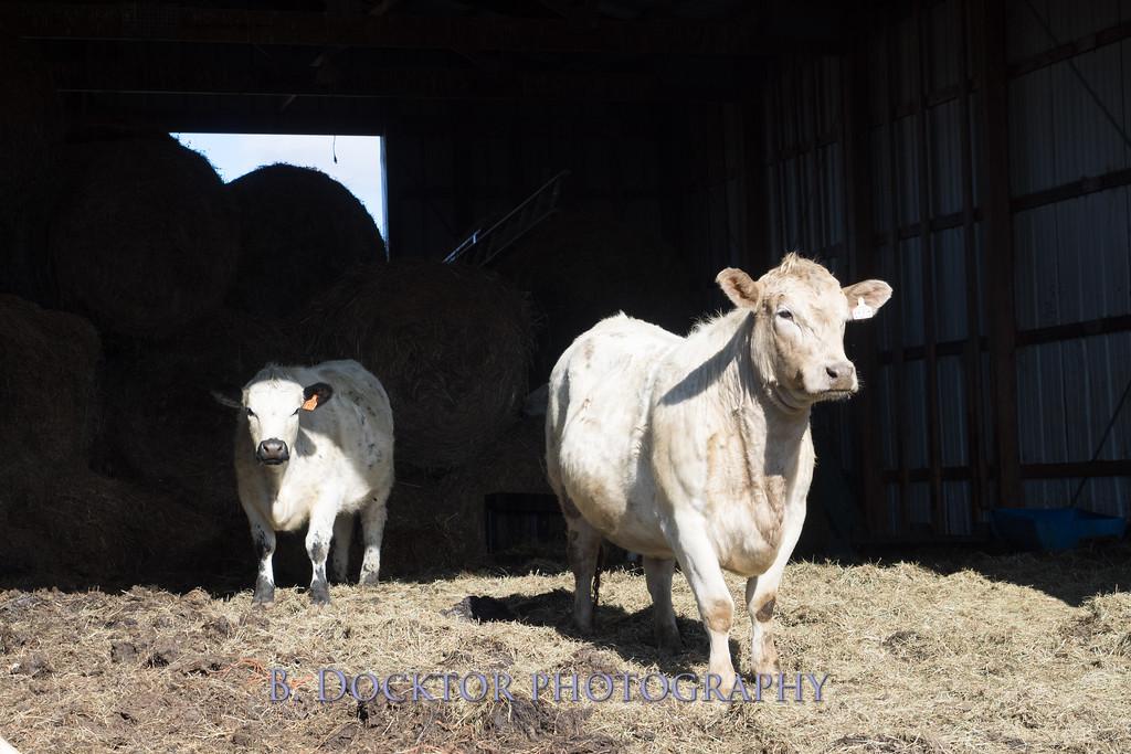 1602_Larry Lampman Fox Hill Farm_037