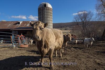 1602_Fox Hill Farm_025