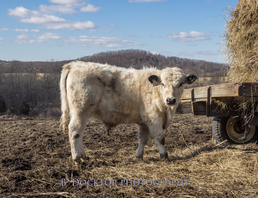 1602_Fox Hill Farm_012