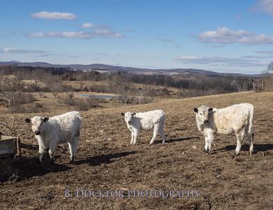 1602_Larry Lampman Fox Hill Farm_004