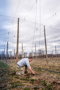 Hudson Valley Hops & Grains-2