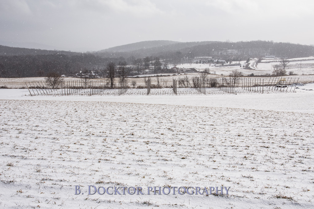 1802_Hudson Valley Hops & Grains in snow_008
