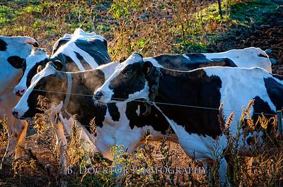 Millerhurst Farm-7-2