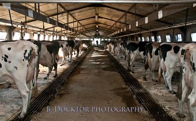 Millerhurst Farm-35