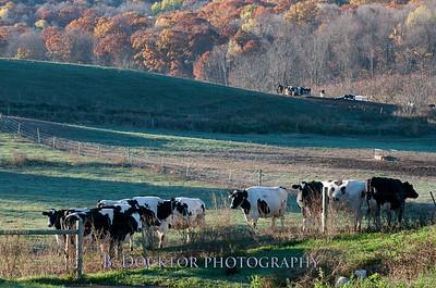 Millerhurst Farm-23