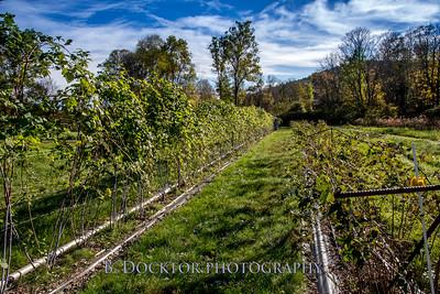 1810_Natural Roots Farm_009