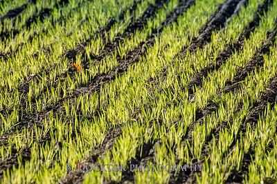 1810_Natural Roots Farm_030