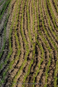 1810_Natural Roots Farm_010