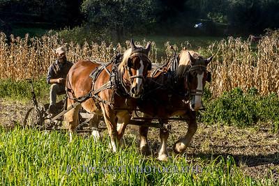 1810_Natural Roots Farm_049