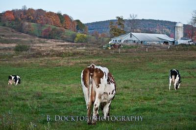 1010_Ronnybrook Farm_077