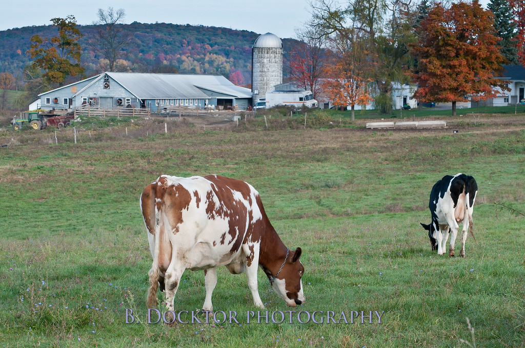 1010_Ronnybrook Farm_076