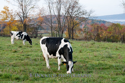1010_Ronnybrook Farm_086