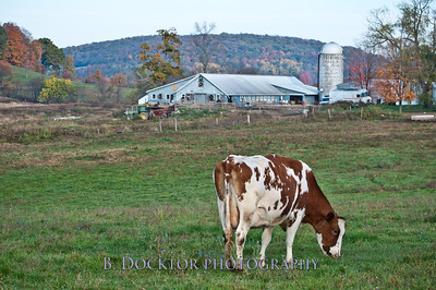1010_Ronnybrook Farm_075