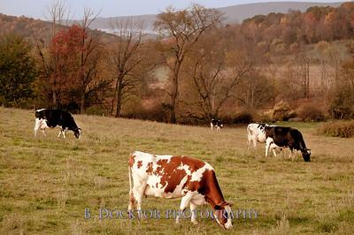 1010_Ronnybrook Farm_089