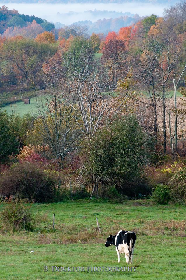 1010_Ronnybrook Farm_098