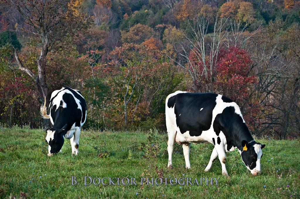 1010_Ronnybrook Farm_071