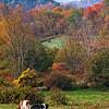 1010_Ronnybrook Farm_104