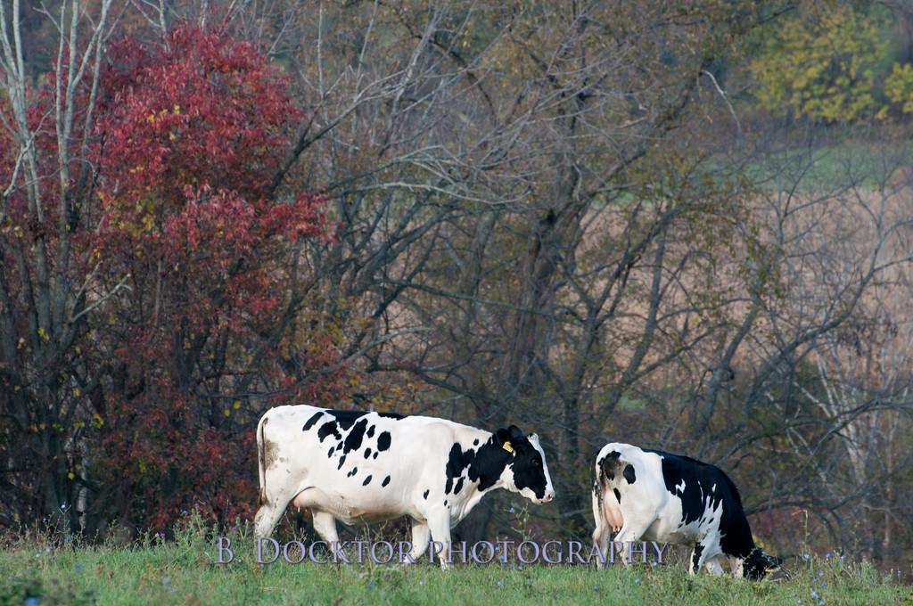 1010_Ronnybrook Farm_067