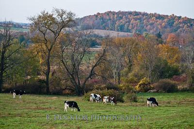 1010_Ronnybrook Farm_108
