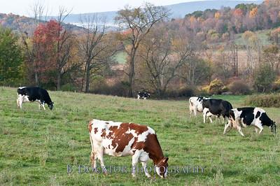 1010_Ronnybrook Farm_088