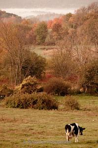 1010_Ronnybrook Farm_093