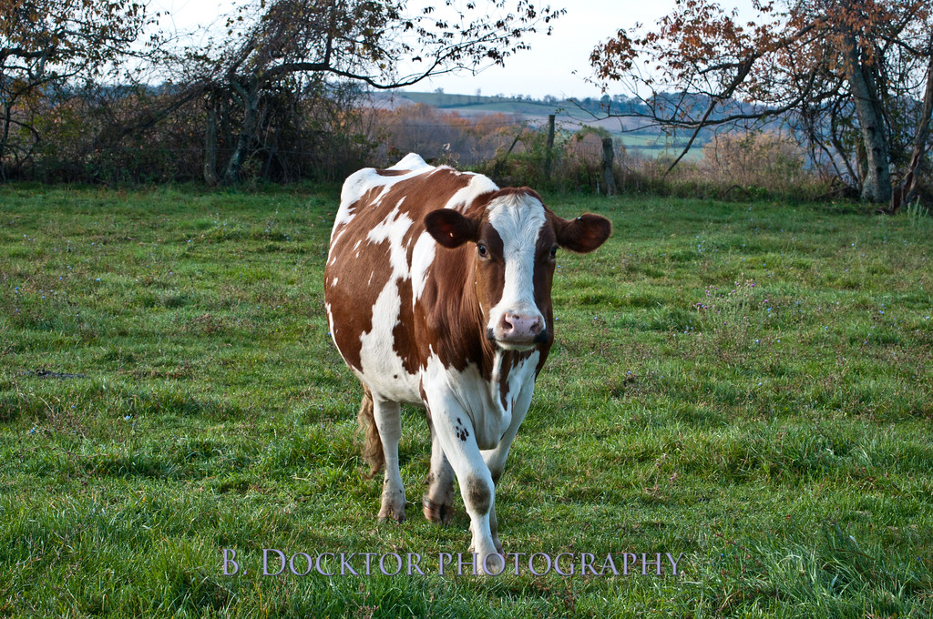 1010_Ronnybrook Farm_072