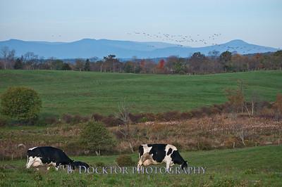 1010_Ronnybrook Farm_068