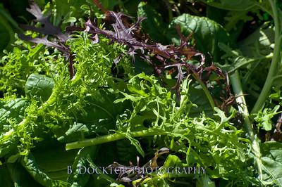 1110_Herondale-Sol Flower Farm_175