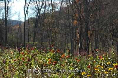 1110_Herondale-Sol Flower Farm_049