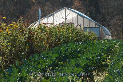 1110_Herondale-Sol Flower Farm_051