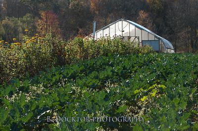 1110_Herondale-Sol Flower Farm_050