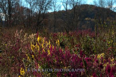 1110_Herondale-Sol Flower Farm_058
