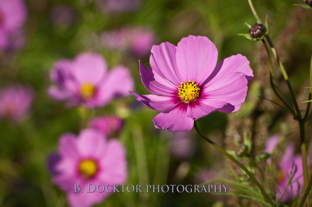 1110_Herondale-Sol Flower Farm_062