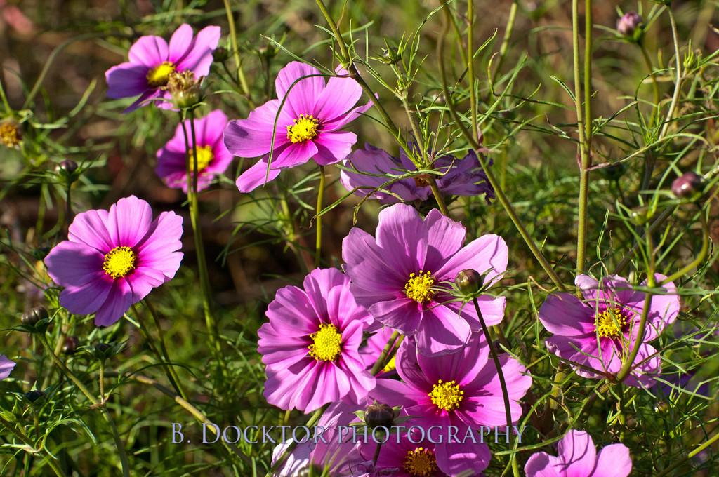 1110_Herondale-Sol Flower Farm_060