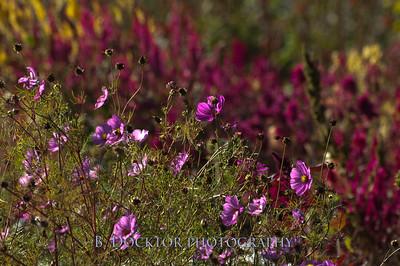 1110_Herondale-Sol Flower Farm_056