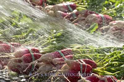 1110_Herondale-Sol Flower Farm_170