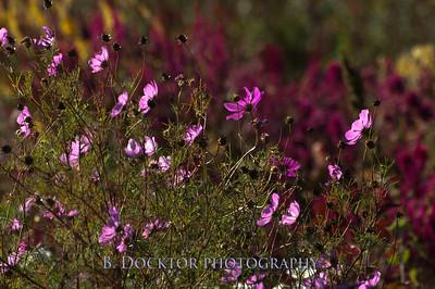 1110_Herondale-Sol Flower Farm_055