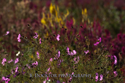 1110_Herondale-Sol Flower Farm_054