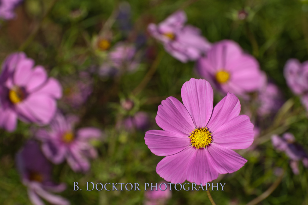 1110_Herondale-Sol Flower Farm_059
