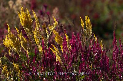 1110_Herondale-Sol Flower Farm_057