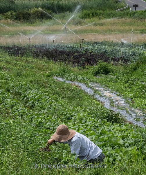 Sol Flower Farm summer 2015-16
